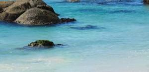 Brillenpinguine am Boulders Beach in der Nähe von Kapstadt in Kapstadt