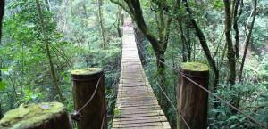 Regenwald in El Salvador in El Salvador