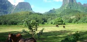 Typische Landschaft auf Moorea in Französisch-Polynesien in Französisch-Polynesien