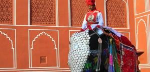 Ein Mann auf einem geschmückten Elefanten in Rajastan, Indien in Indien