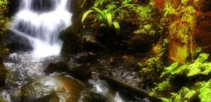 Typischer Wasserfall entlang der Wanderwege auf Madeira in Madeira