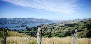 Typische Landschaft in Neuseeland in Neuseeland