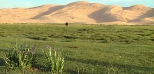 Eine Oase in der Wüste Gobi in Mongolei