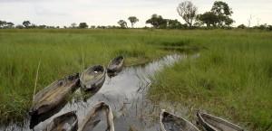 Landschaft im Okavango-Delta in Botswana in Botsuana