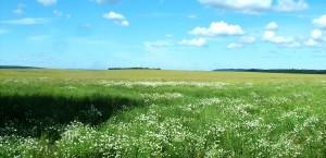 Typische Weidelandschaft im polnischen Flachland in Polen