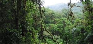 Regenwald im Nationalpark