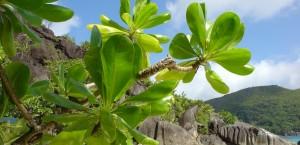 Strand auf einer der Seychellen-Inseln in Seychellen