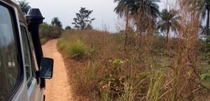 Straße durch den Busch in Sierra Leone in Sierra Leone