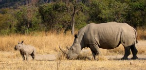 Impressionen einer Safari in Simbabwe