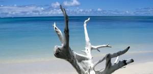 Ausgebleichtes Treibholz am Strand von Fidschi in Fidschi