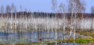 Typische Sumpflandschaft in Weißrussland in Belarus